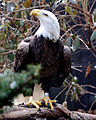 National Aviary (13020032365).jpg