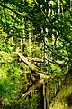 Nationalpark Jasmund - Modderstubben (6).jpg