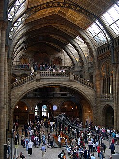 Natural History Museum hall.jpg