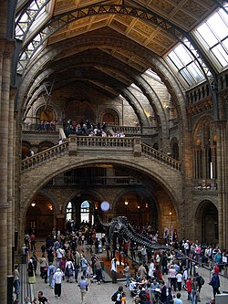 The central hall of the Waterhouse building, including the famous Diplodocus cast