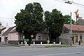 Naturdenkmal 348 Lebensbäume Siegesplatz (1).jpg
