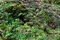Naturdenkmal Hessen Drachenbrünnchen 2.jpg