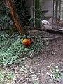 Nature 0190628-WA0113.jpg