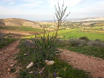 Nature des Monts Beni Chougranes Mohammadia 32.jpg