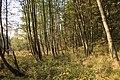 Nature reserve Dobrockovske hadce in autumn 2011 (24).JPG