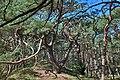 Naturpark Insel Usedom Waldweg bei Trassenheide.jpg