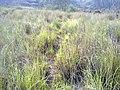 Navidhand new 427 - panoramio.jpg