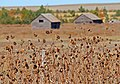 Nebraska Panhandle IMG 1595.jpg