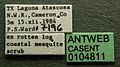 Neivamyrmex pauxillus casent0104811 label 1.jpg