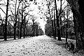 Neve nel Parco Ducale di Parma.jpg