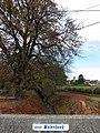 Niel-bij-Gingelom Molenbeek - panoramio.jpg