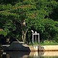 Night Heron at Dam (7455703608).jpg