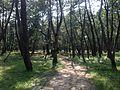 Niji Pine Grove 6.jpg