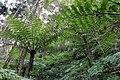 Northern limit of Hego habitat in Hachijojima Island G.jpg