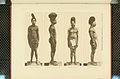 Nova Guinea - Vol 3 - Plate 50.jpg