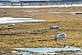 Ny-Ålesund 2013 06 07 2318 (10178465804).jpg