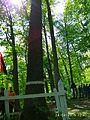 Oak tree near Gaydamatskyi stav 1.jpg