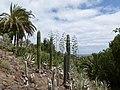 Oasis Park botanical garden - Fuerteventura - 03.jpg