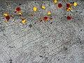 Ofrenda de Día de Muertos-Clemolito.jpg