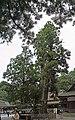 Omiwa jinja shrine , 大神神社 - panoramio (3).jpg