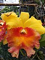 Orchid from Thailand 6.jpg