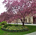 Osgoode Hall, Toronto, in Bloom (27066797221).jpg