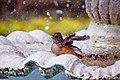 Pássaro na fonte.jpg