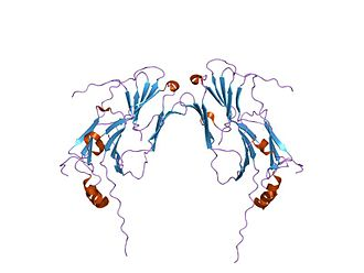 Protein folding - Example of a small eukaryotic heat shock protein.