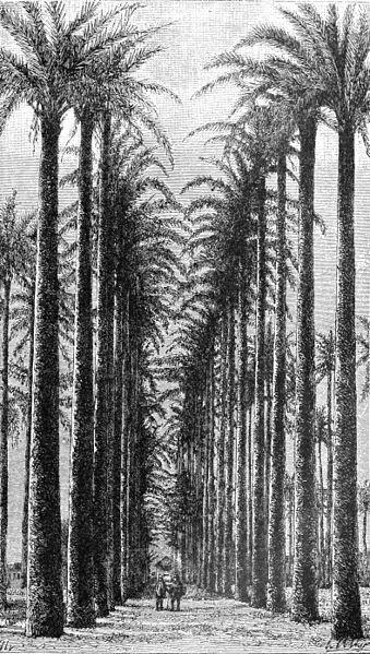 palms - image 1