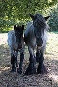 Paard 06.jpg