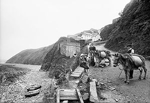 Bucks Mills - Pack donkeys at Buck Mills, 1906