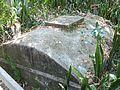 Palmetto FL Emerson Point Portavant Mound cistern01.jpg