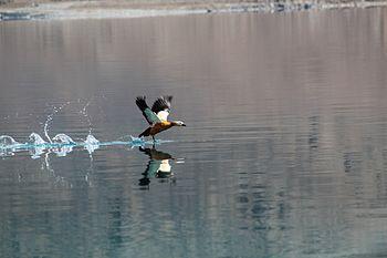 Pangong Lake Ladakh 4.jpg