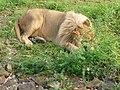 Parc animalier de Taza 21.jpg