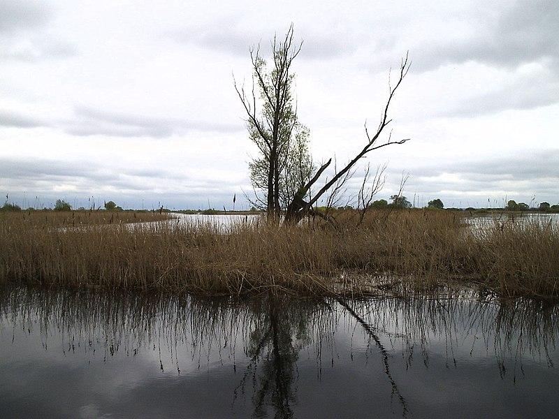 Najmłodszy Park Narodowy w Polsce - Ujście Warty