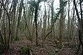 Park Wood - geograph.org.uk - 1716263.jpg