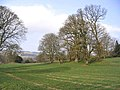 Pasture and trees - geograph.org.uk - 383435.jpg