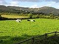 Pasture at Kilcrohane - geograph.org.uk - 14865.jpg