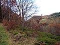 Path through Cwm Rheidol - geograph.org.uk - 280155.jpg