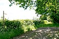 Perthi-bach Lane - geograph.org.uk - 448646.jpg