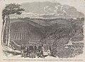 Peruvian Bark Tree Plantations in the Neilgherry Hills, India - ILN 1862 (cropped).jpg