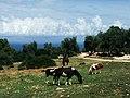 Peschici-Landschaft01.jpg