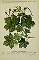 Pflanzen der Heimat (Tafel 23) (6099374353).jpg