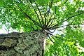 Pidhorodne-modryna-n1-15058029.jpg