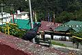 Pigeon, Rumtek Temple, Sikkim (8083552384).jpg