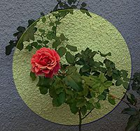 Róża Wikiźródła Wolna Biblioteka