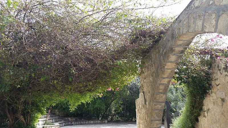 גשר הצמחים
