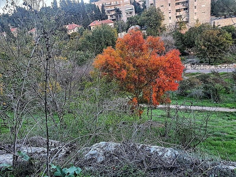 ירושלים הגן הבוטני