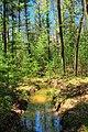 Pine Swamp (3) (8719745718).jpg