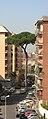 Pinus pinea in Rome.JPG